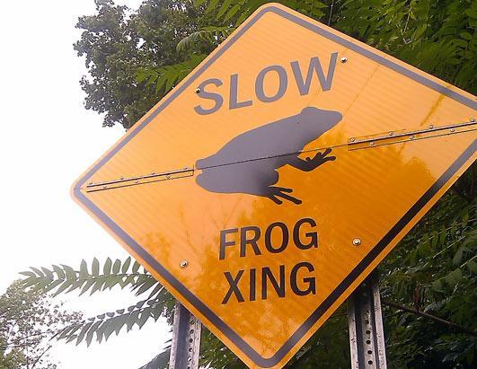 ht_frog_crossing_jef_ss_110816_ssh