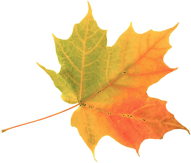 autumn20leaf