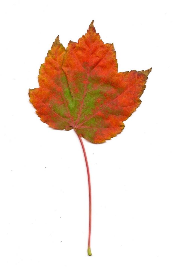 Just one leaf01 copy