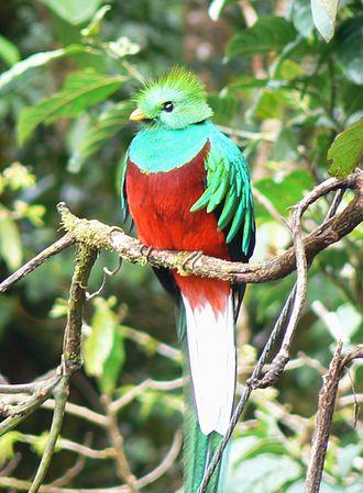 330px-Quetzal01