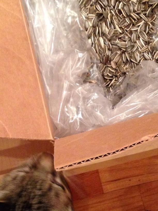 oscar and sunflower seeds