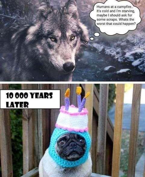 wolf and pug